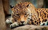 تصاویر بی نظیری از نادرترین گونه های حیوانی در ایران