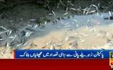 رها شدن مواد خطرناک شیمیایی در رود سلتج توسط هند و مرگ دهها هزار ماهی در پاکستان